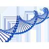 Patrimonio genetico/DNA