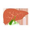 La salute del fegato