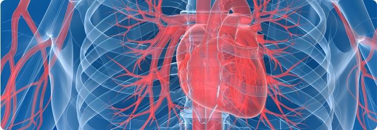 Salute del cuore, circolazione, pressione sanguigna & dei vasi sanguigni