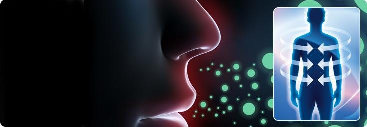 Immunologia sistema (Immunitario)