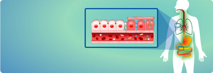 Membrane mucose - mucosa